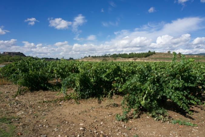 Vinas de la Rioja, Spain